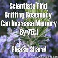 Rosemary Oil Meme - Sage Institute of Massage